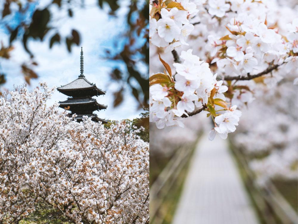 色見學-日本傳統色-櫻色官網-03